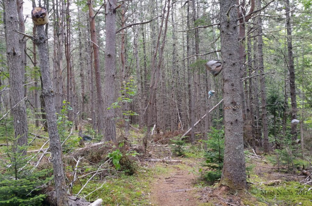Hiking in Canada: Gairloch Road Trail, Prince Edward Island: Old Pots and Tubs on Gairloch Road Trail (© Magi Nams)