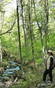 Hiking in Canada: Rogart Mountain, Nova Scotia: At Leattie Brook (© Magi Nams)