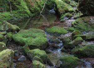 Hiking in Canada: Fundy National Park, New Brunswick: Rock pool at Dobson Falls, Fundy National Park (© Magi Nams)