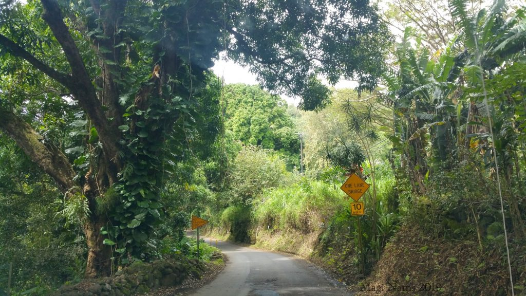 Exploring America: Maui, Hawai'i: Hāna Highway south of Hāna, Maui, Hawai'i (© Magi Nams)