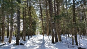 Exploring Faith: Who Am I to Receive a Gift of Such Beauty?: My Access Road through Sunlit Hemlocks (© Magi Nams)