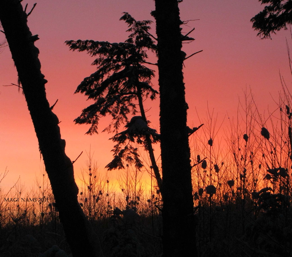 Exploreing Faith: Finding Joy in the midst of Suffering: Winter Sunrise ©2011 Magi Nams)