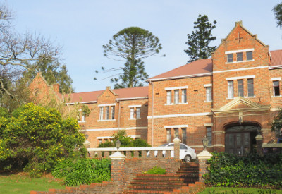 Six Months in South Africa: Winter Morning in Grahamstown: Bunya Pine (Centre) on Rhodes University Campus (© Magi Nams)