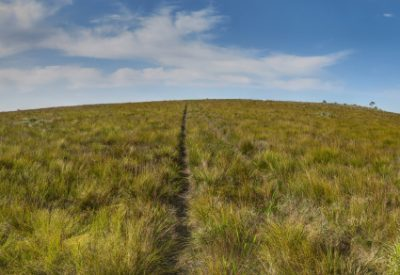 The Writing Life: Beginning Rock and Thorn: Six Months in South Africa: Oldenburgia Trail (© Vilis Nams)